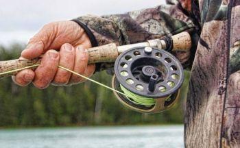 Fiske og fiskebutikker